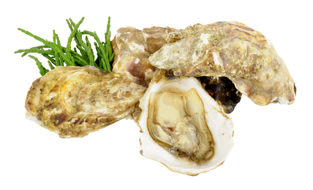 aphrodisiac: Group of fresh live oysters isolated on a white background