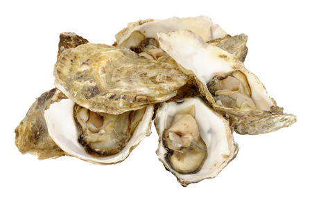 indulgent: Group of fresh live oysters isolated on a white background