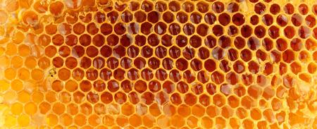 Honey bee wax honeycomb cells with sweet honey Stock Photo