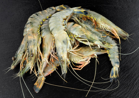 Group of whole raw black king tiger prawns on a slate stone background