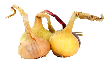 Fresh home grown organic onions isolated on white