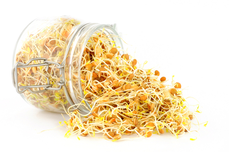 Fresh sprouting brown lentils in a glass storage jar