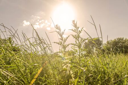 summers: Grassy sunshine on a hot summers day