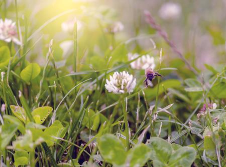 flew: Bee flying between flowers looking for pollen Stock Photo