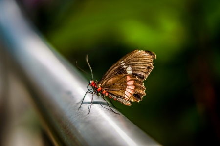 hand rail: Butterfly resting on a metal hand rail  Stock Photo