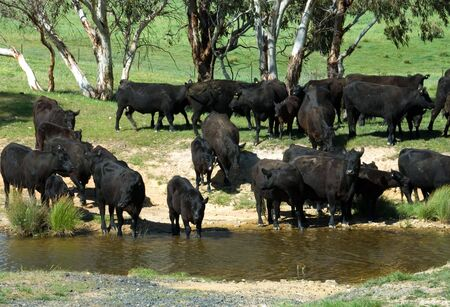 australia farm: At the Waterhole