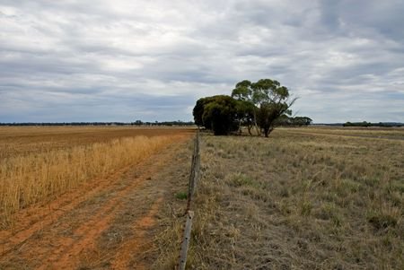 fenceline: A dividing fence on a farm in South-West New South Wales, Australia