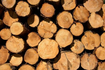 Logs, stacked, ready for tranportation to the mill