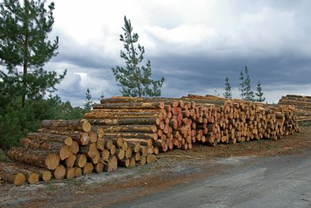 logging industry: Logs, stacked, ready for tranportation to the mill