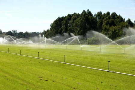 An irrigation system on a turf farm, near Windsor, New South Wales, Australia