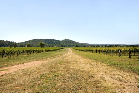 A road leading into the a vineyard, near Mudgee, New South Wales, Australia photo
