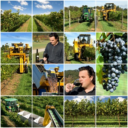 Production scenes from a vineyard, including the winemaker sampling the end result Stock Photo