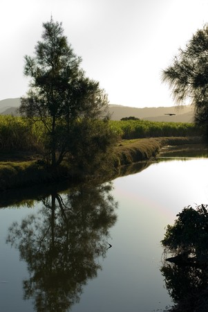 A late afternoon irrigation canal scene adjacent to a Sugar Cane field Stock Photo - 7405783