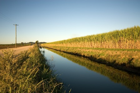 fine cane: A sugar cane field, adjacent to an irrigation canal, captured in the late afternoon Stock Photo