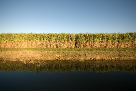 fine cane: A late afternoon irrigation canal scene adjacent to a Sugar Cane field