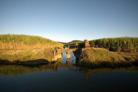 fine cane: Irrigation canals in a sugar cane farm, Northern NSW, Australia