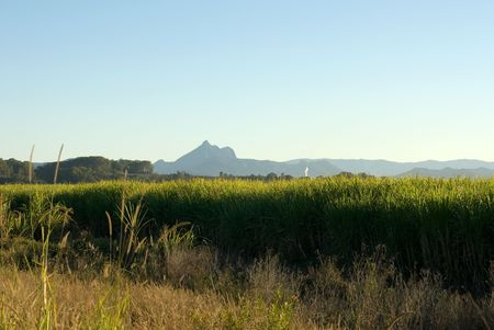 fine cane: A sugar cane farm, with the imposing Mount Warning in the background, Northern NSW, Australia Stock Photo