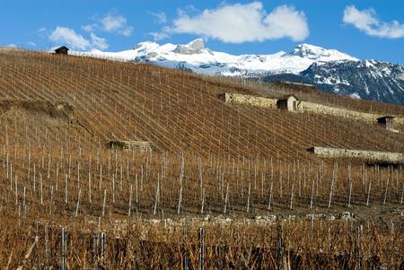 steep: Vineyards on a steep hillside, Switzerland Stock Photo