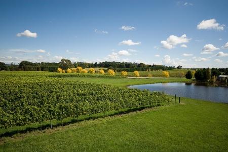 australie landschap: Een mening van een wijngaard, groeiende koud klimaat wijnen, in de buurt Sutton Forest, op de zuidelijke hooglanden van New South Wales, Australië