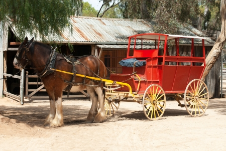 A Stage Coach and Clydesdale Draught Horse photo