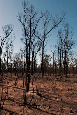 This scene, comprising parched earth and burnt trees, was captured following the recent bushfires in New South Wales, Australia photo