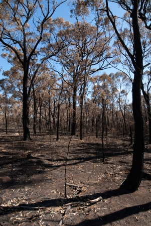 comprising: This scene, comprising parched earth and burnt trees, was captured following the recent bushfires in New South Wales, Australia