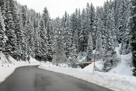 winter trees: An alpine road through a forest in Austria