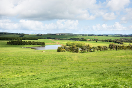 pastures: Lush pasture in farmland, Southern Victoria, Australia