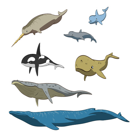 espermatozoides: Conjunto de ilustración vectorial de dibujos animados de las ballenas y delfines.