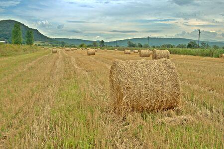 hayroll: Hay bales farm agriculture field
