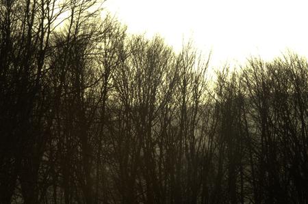 deep forest sunset view