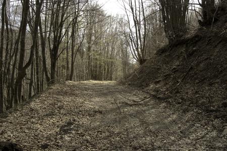 Forest road Reklamní fotografie