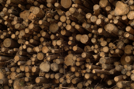 Stack of wood logs piled