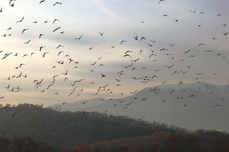 Bandada de pájaros sobre el bosque, cielo matutino, fondo de montañas Foto de archivo