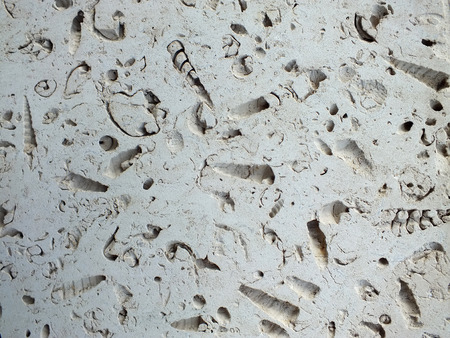 white fossil limestone slab used in construction paths and interiors