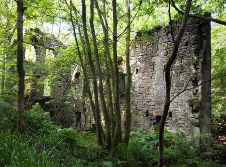 ruins of staups mill in jumble hole clough overgrown with woodland trees