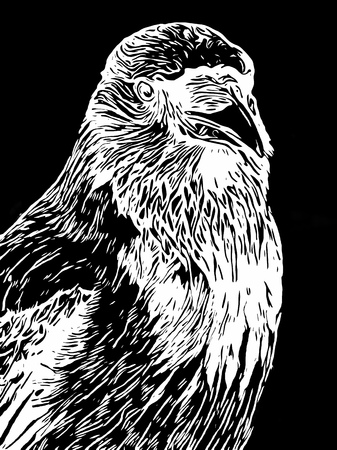 portrait of a crow in a white woodcut or vintage engraving style on a black background Stock Photo