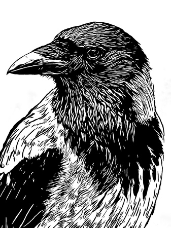 portrait of a crow with head turned looking in black and white ink or woodcut vintage style Stock Photo