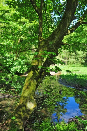 Woodland spring scene with vibrant green trees overhanging a calm blue pond and vibrant green foliage in bright sunlight and contrasting shadow