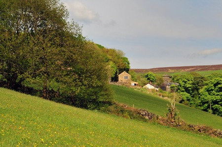 stone farmhouses behind steep hillside meadows with yellow wildflowers divided by dry stone walls set above a tree lined valley with yorkshire dales moorland in the distance