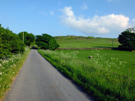 long straight empty country road with spring flowers and trees growing along the edges with sheep grazing in walled fields with a hill in the background on a bright spring day with blue sky taken in the yorkshire dales