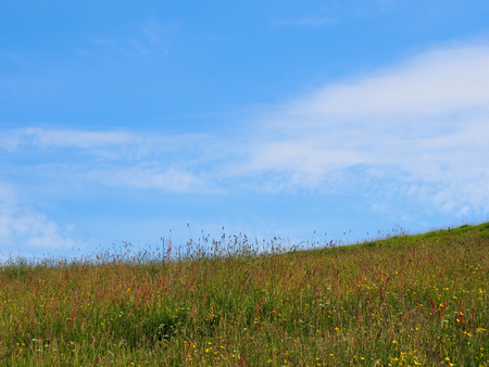 bright early summer hay meadow with tall natural grasses and wildflowers on a bright sunny morning with blue sky and clouds
