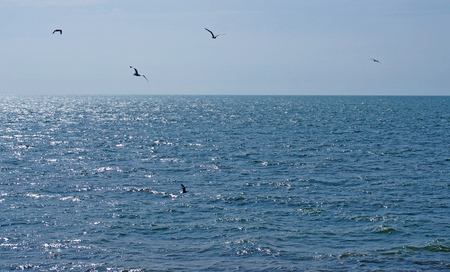 a flock of seagulls flying over a calm deep blue sunlit sea with bright blue summer sky Stock Photo