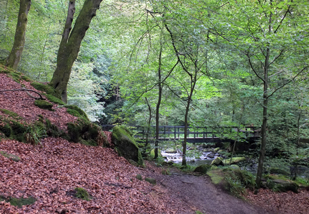 landscape with a pathway in a steep woodland valley leading to a wooden footbridge crossing a river surround by moss covered boulders and tall forest beech trees with dense green summer foliage Stock Photo