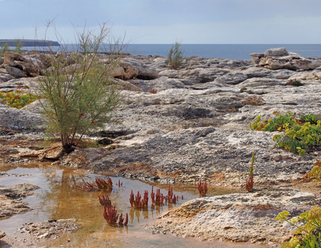 coastal limestone rocks with pools of water with typical menorcan coastal plants growing in a harsh environment with bright sunlit sea in the background