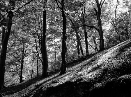 high contrast monochrome image of a sunlit forest on a steep sloping hill with dark shadows