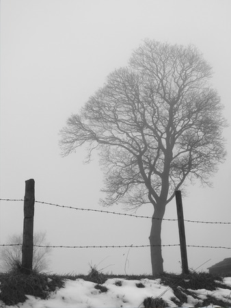 a single tree in silhouette in winter fog behind a fence with snow on the ground Stock Photo
