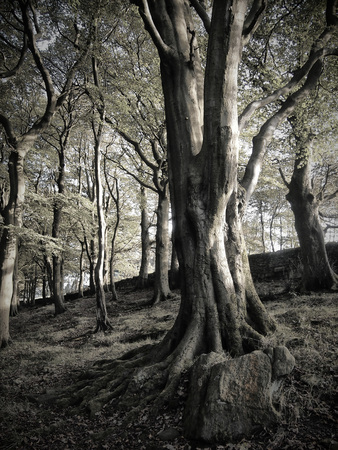trees in dark woodland on a steep hill