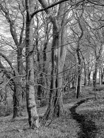 a monochrome image of a dark curving narrow pathway through tall beech trees in a winter forest Stock Photo