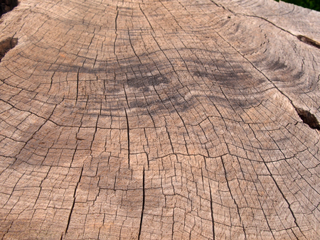 old rough brown timber surface of a cut tree with darker scorch marks and cracks following the growth rings